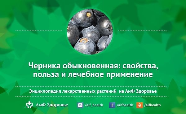 Ягоды черники полезны для зрения, ими можно лечить гастрит, цистит и даже понос у детей, а содержащиеся в листьях черники вещест