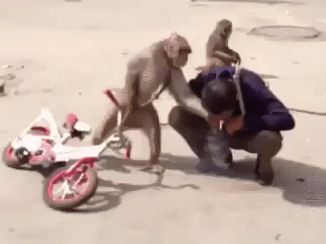 Видео топтать мужика ногами фото 426-781