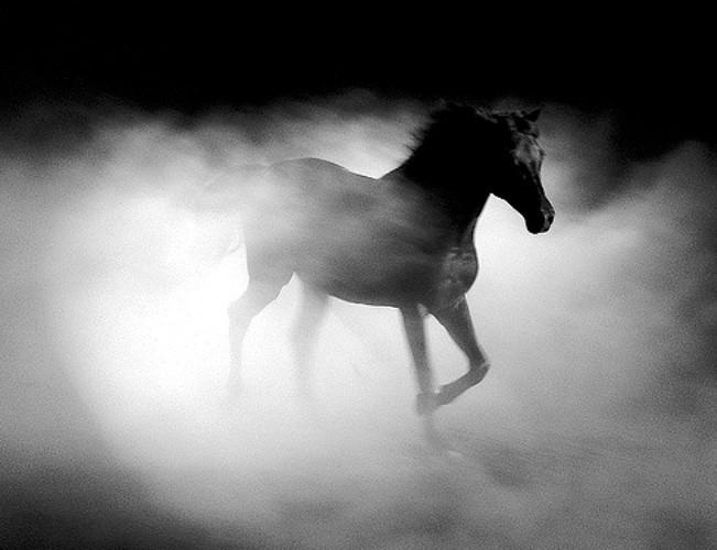 Если вы быстро и целенаправленно скачете, то через 20 дней все само собой утрясется и наладится, но если лошадь под вами еле перебирает ноги, то возможно, в ближайшие 2 недели вы сляжете от переживаний.