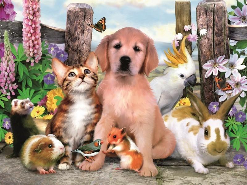 животные на о и фотки и названия