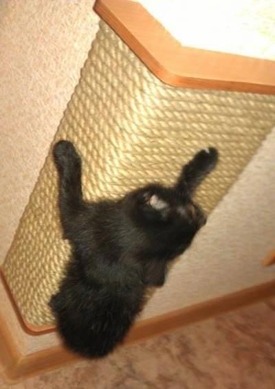 Когтеточку для кошек сделать своими руками