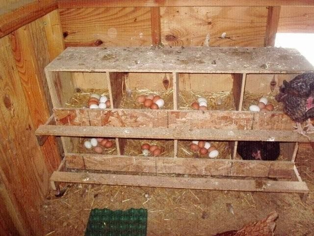 как сделать гнездо для кур своими руками фото