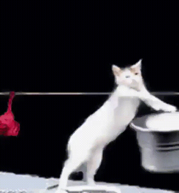 картинки кошек гифки