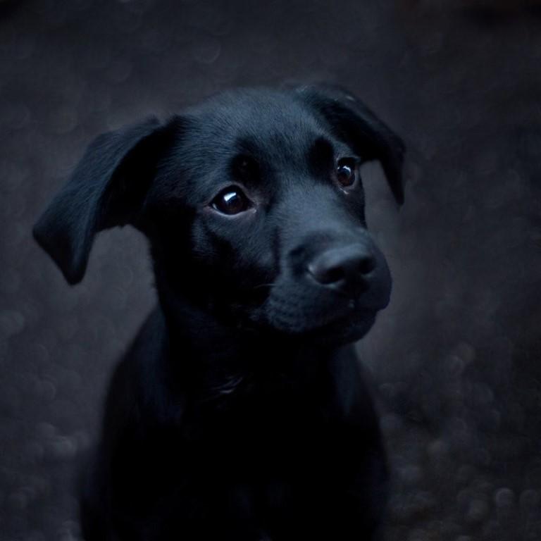 Вы разняли псов — сумеете вернуть гармонию в ваш союз.