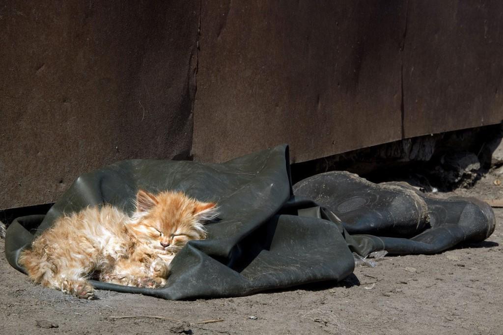 Двое курян подобрали на улице котят с бешенством
