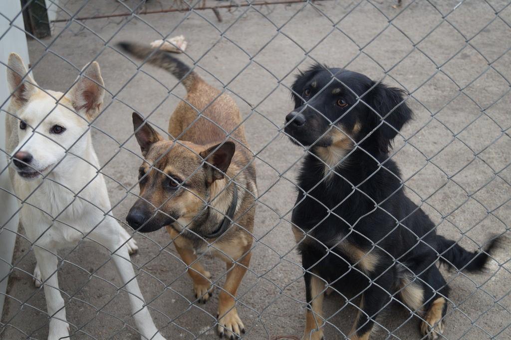Ловить бродячих собак в Курске вновь будет «Экосервис»