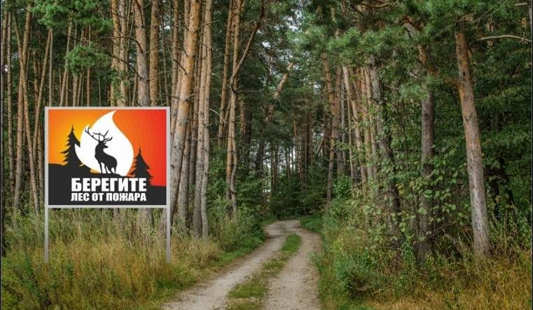 Курянам разрешили ходить в лес