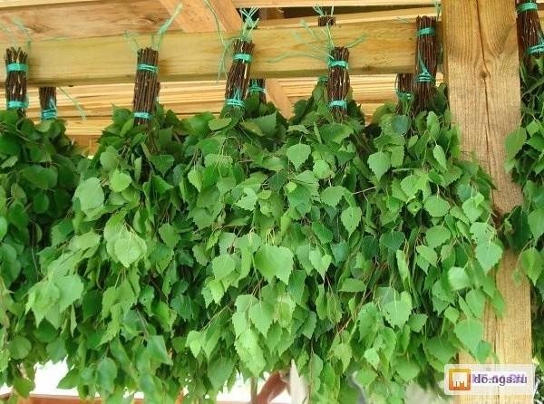 Продам веники для бани-сауны в любых количествах.+7-953-919-84-11