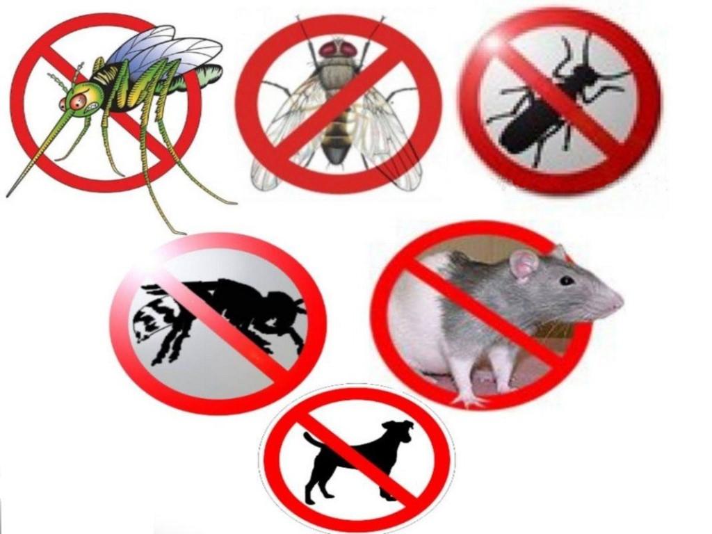 Быстрый,безопасный,НЕДОРОГОЙ,эффективный способ избавится от вредителей уже ЗАВТРА (грызуны,птицы,комары,кроты,насекомые,и даже собаки).Заходите к нам на сайт,выбирайте и заказывайте по специальной цене: