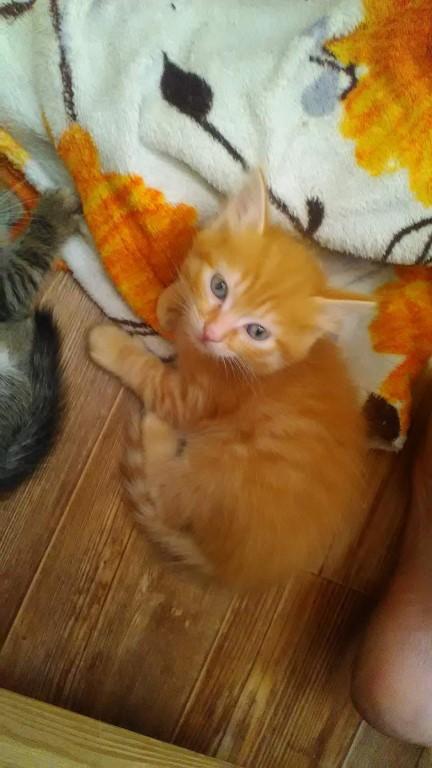 Отдам котёнка в добрые руки т.8952 755 6423